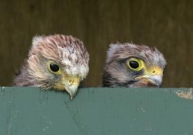 Kom kijken, website vogelwacht Marssum e.o. online!