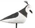 Expositie Lokvogels in natuur museum FRYSLAN