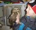 'Meneer de uil' in Vogelopvang Marssum