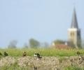 Nog 2 plaatsen: Zondag 12 mei,  bezoek aan weidevogelboer Murk Nijdam in Wommels